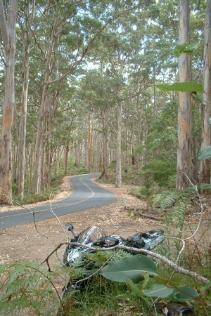 An afternoon ride to Augusta via the tall timber roads